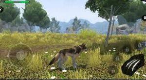 Wolf Evolution